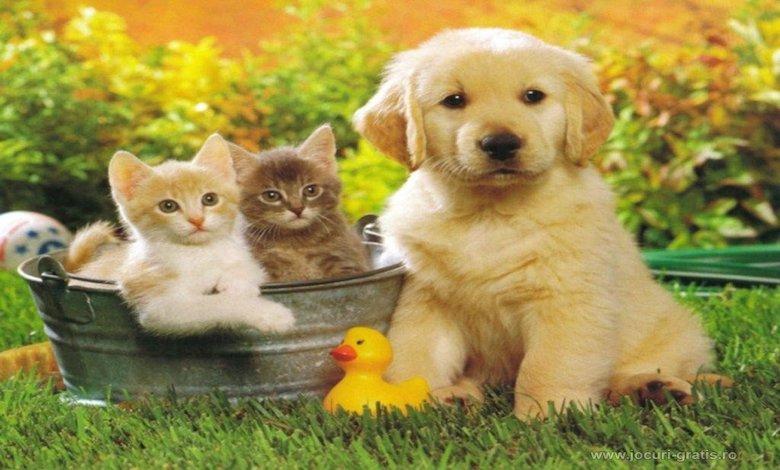 Ücretsiz Kedi, Köpek Sahiplenme ve Sahiplendirme